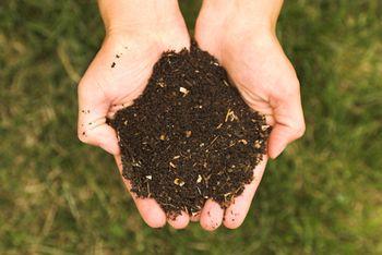 Compost-02